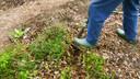 Ageless Gardens S1E1: Healing Plants